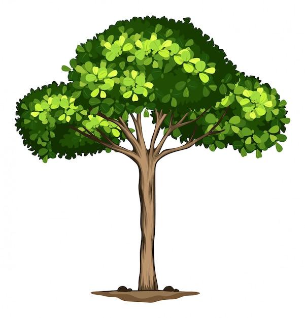Uma árvore idolatrada no fundo branco Vetor grátis