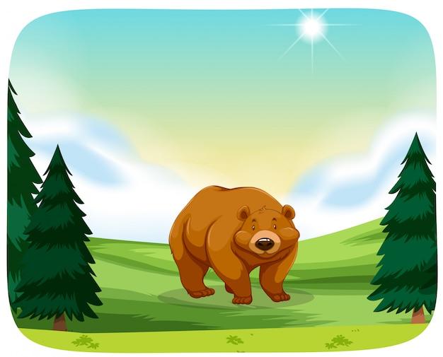 Urso pardo na cena da natureza Vetor grátis