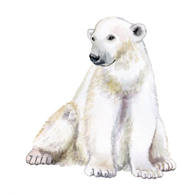 Urso polar isolado ... aquarela Vetor Premium