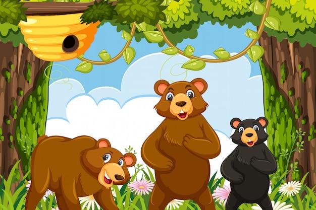 Ursos na cena da selva Vetor Premium
