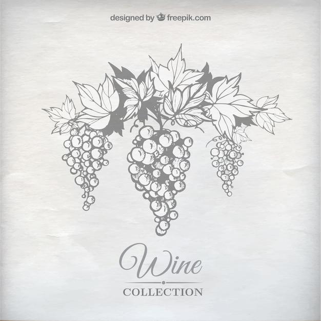 Uvas para vinho Vetor grátis