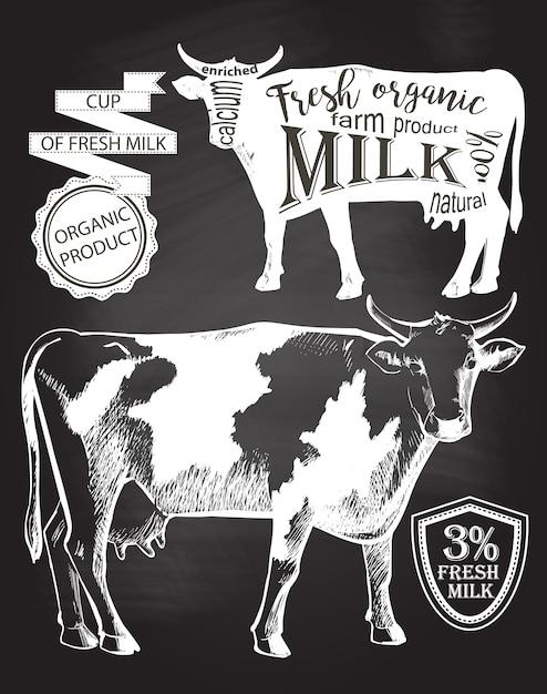 Vaca. desenhado à mão. desenho de giz na lousa ilustração vetorial Vetor Premium