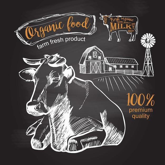 Vaca que encontra-se na exploração agrícola do pasto. desenho de giz gráfico vintage no quadro-negro Vetor Premium