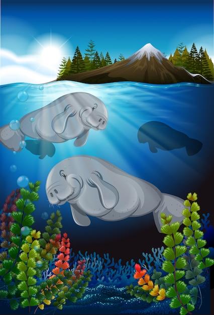 Vacas marinhas nadando no fundo do mar Vetor Premium