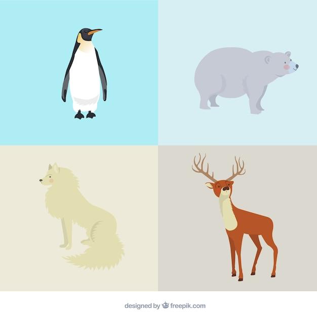 Variedade de animais árticos Vetor grátis