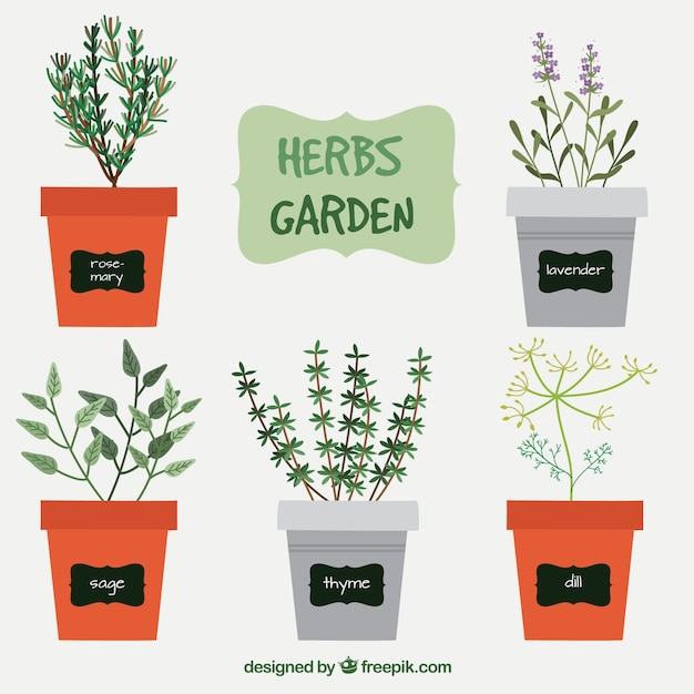 Variedade de ervas jardim Vetor grátis