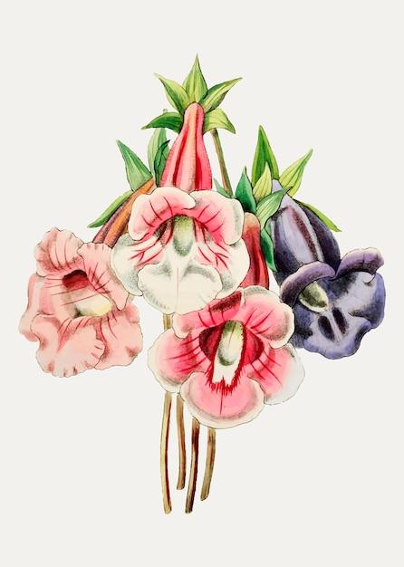 Variedade de flores gloxinia Vetor grátis