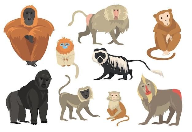 Variedade de macacos exóticos engraçados e conjunto plano de macacos Vetor grátis