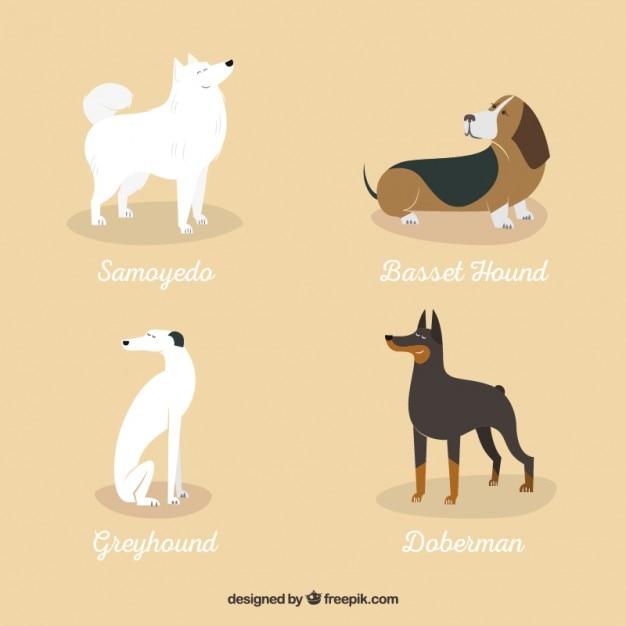 Variedade de raças de cães Vetor grátis