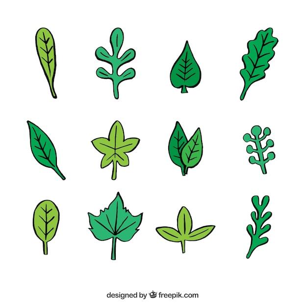 Variedade Desenhos De Folhas Verdes Vetor Gratis