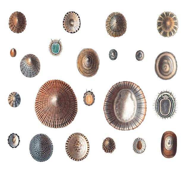 Variedades de caracóis marinhos Vetor grátis