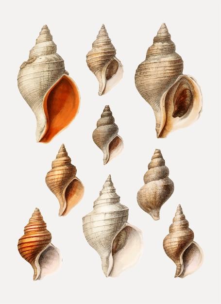 Variedades de concha Vetor grátis