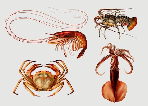Variedades de frutos do mar Vetor grátis