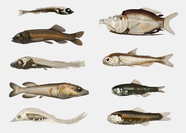 Variedades de peixe Vetor grátis