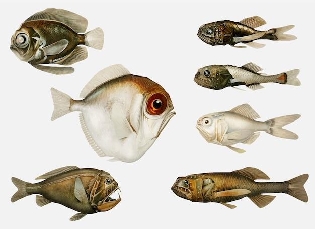 Variedades de peixes do fundo do mar Vetor grátis