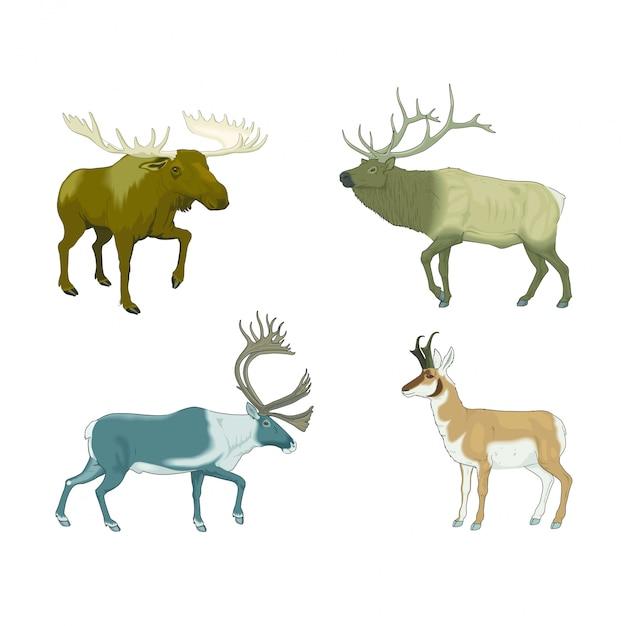 Vários cervos com chifres e alces vivendo no estepe Vetor Premium