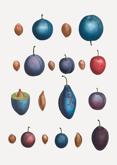 Vários tipos de ameixa Vetor grátis