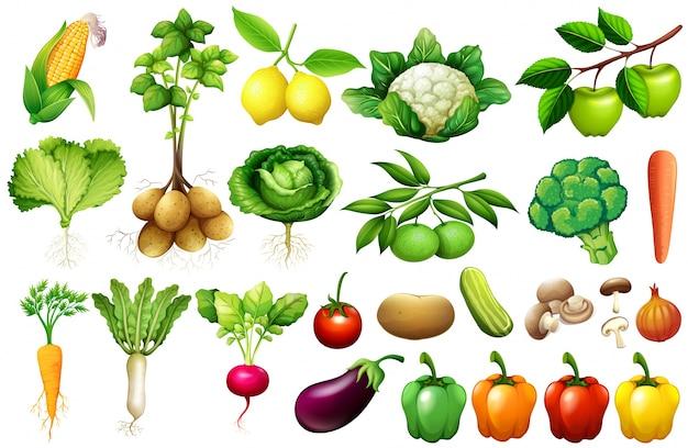 Vários tipos de vegetais ilustração Vetor grátis