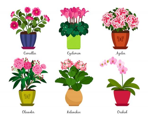 Vasos de flores e flores de planta de casa em vasos Vetor Premium