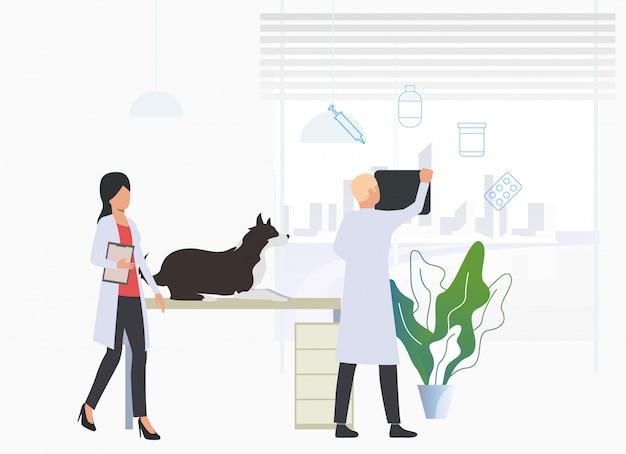 Veterinários que examinam o cão na clínica veterinária Vetor grátis