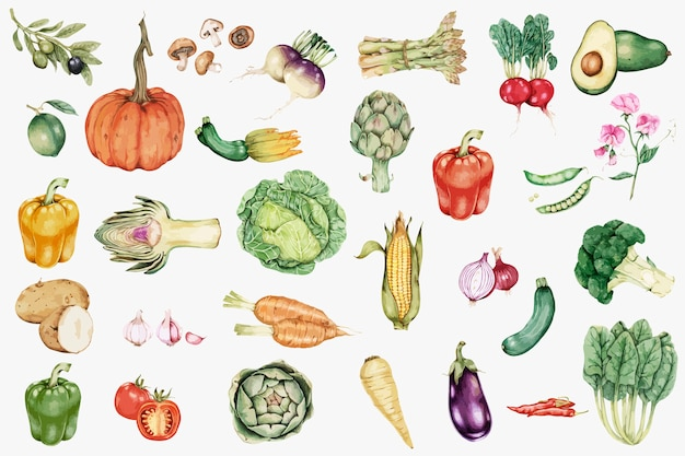 Vetor de coleção vegetal desenhada de mão Vetor grátis