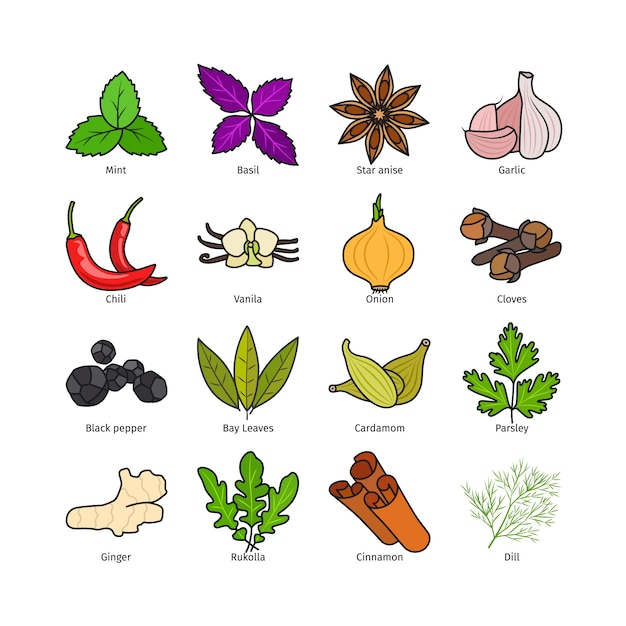 Vetor de ervas e especiarias Vetor Premium