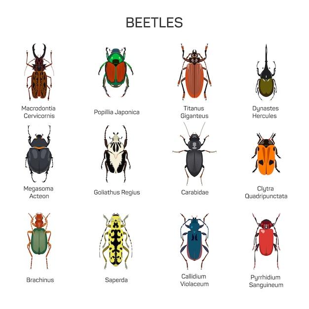 Vetor de insetos definido no design de estilo simples. tipo diferente da coleção das espécies do inseto dos besouros. isolado Vetor Premium