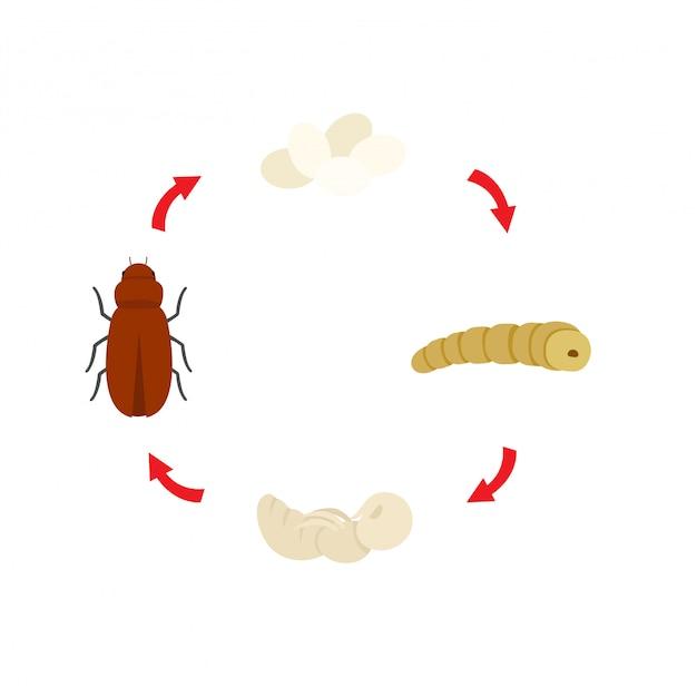 Vetor de larvas de farinha de ciclo de vida de ilustração Vetor Premium