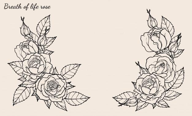 Vetor de ornamento rosa definido pelo desenho de mão Vetor Premium