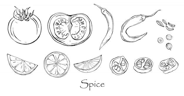Vetor preto e branco desenho de especiarias picantes. Vetor Premium
