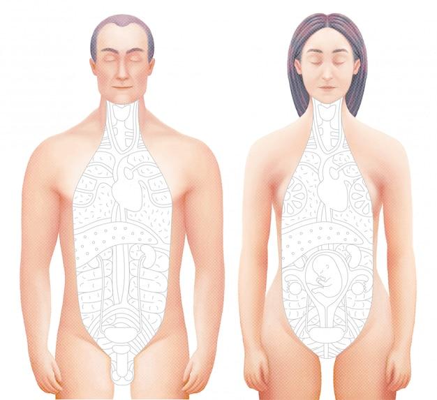 Vetorial, ilustração, de, sected, corpos, de, homem mulher Vetor Premium