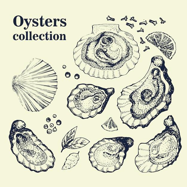 Vetorial mão desenhada coleção de ostras. ilustrações vintage Vetor Premium
