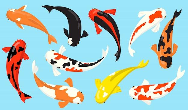 Vista superior do conjunto de ícones planos de peixes de carpa koi Vetor grátis