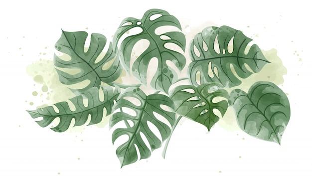 Acquerello delle foglie di monstera su fondo bianco. Vettore Premium