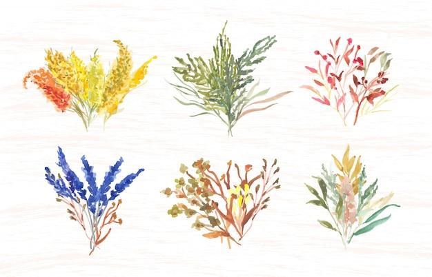 Acquerello di erba bouquet Vettore Premium