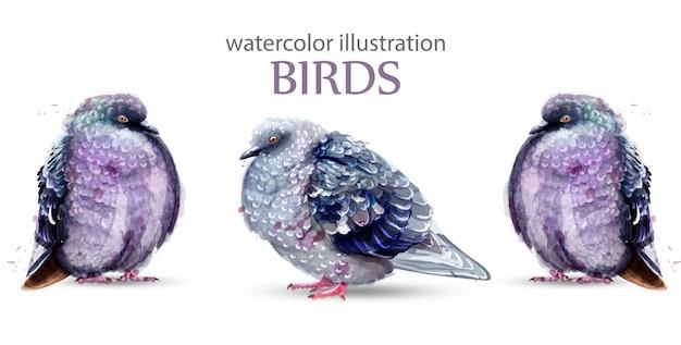 Acquerello di uccelli piccione Vettore Premium