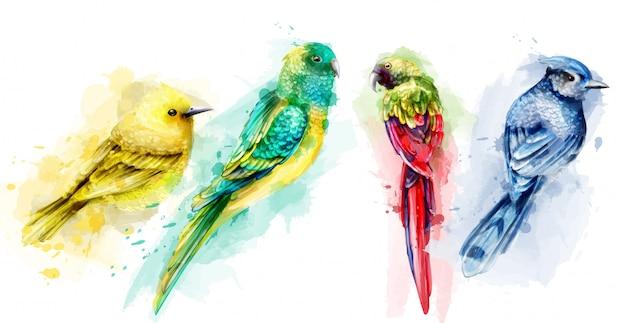 Acquerello di uccelli tropici colorati Vettore Premium