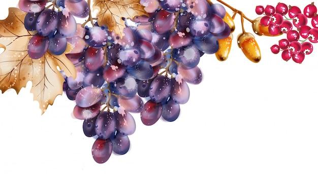 Acquerello di uva. autunno autunno raccolto sullo sfondo Vettore Premium