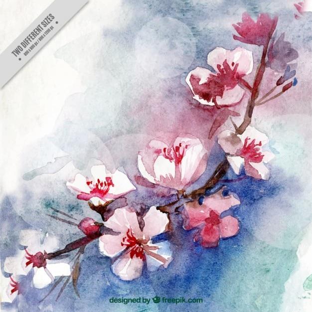 Acquerello fiori di ciliegio sfondo scaricare vettori gratis for Fiori di ciliegio dipinti