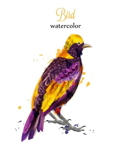 Acquerello uccello tropico Vettore Premium