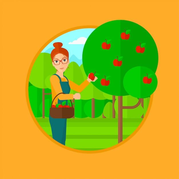Agricoltore che raccoglie mele. Vettore Premium