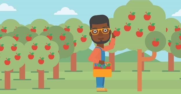 Agricoltore che raccoglie mele Vettore Premium