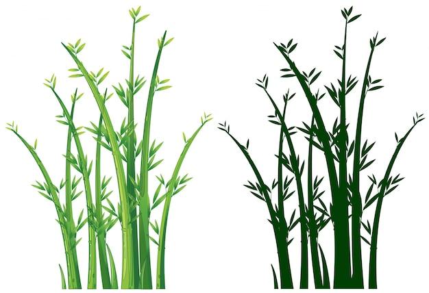 Alberi di bambù in verde Vettore gratuito
