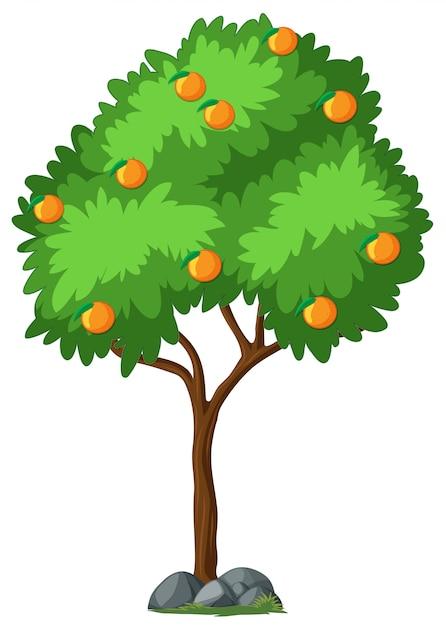 Albero arancione isolato su priorità bassa bianca Vettore gratuito