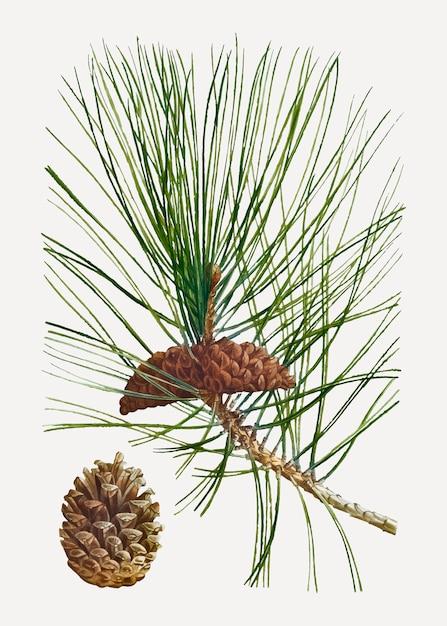 Albero di pino nero Vettore gratuito