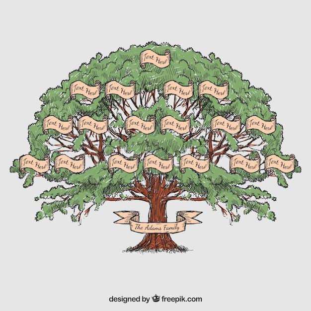 Albero genealogico disegnato a mano Vettore Premium