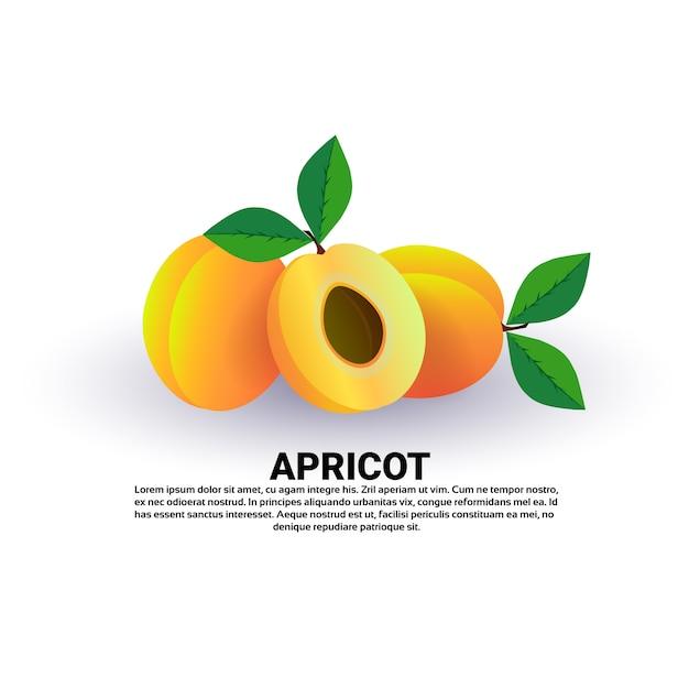 Albicocca su sfondo bianco, stile di vita sano o concetto di dieta, logo per frutta fresca Vettore Premium