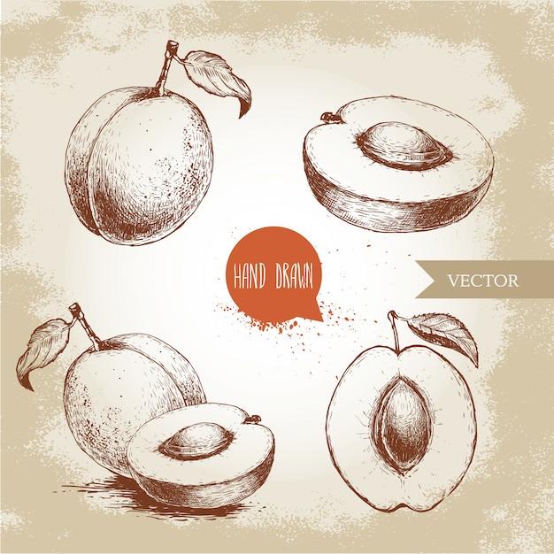 Albicocche mature disegnate a mano messe isolate. illustrazione di cibo eco stile retrò schizzo vettoriale. Vettore Premium