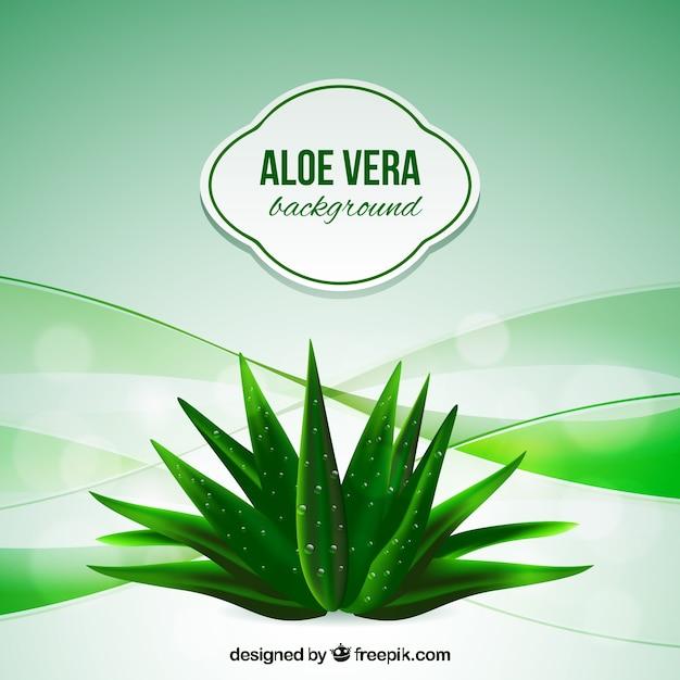 Aloe vera astratto sfondo Vettore gratuito