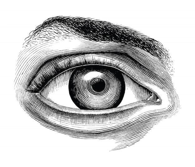 Anatomia della mano dell'occhio umano disegnare clipart vintage isolato su sfondo bianco Vettore Premium